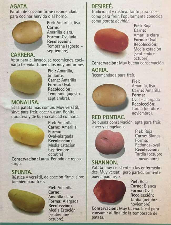 variedades-patata